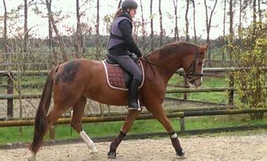 CAV Abzeichen Pferde Leserfotos Dr. Susann Zellmann