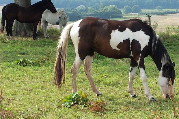 CAV Abzeichen Pferde Leserfotos Sarah Jaegers