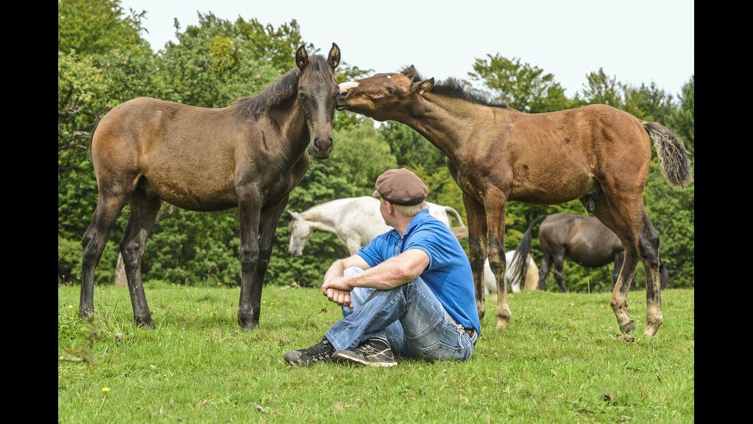 CAV Allein in der Pferde-Herde Aufmacher MS