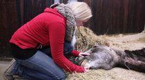 CAV Amour Tierschutz Yvonne Gutsche 21.1. Festliegen 2