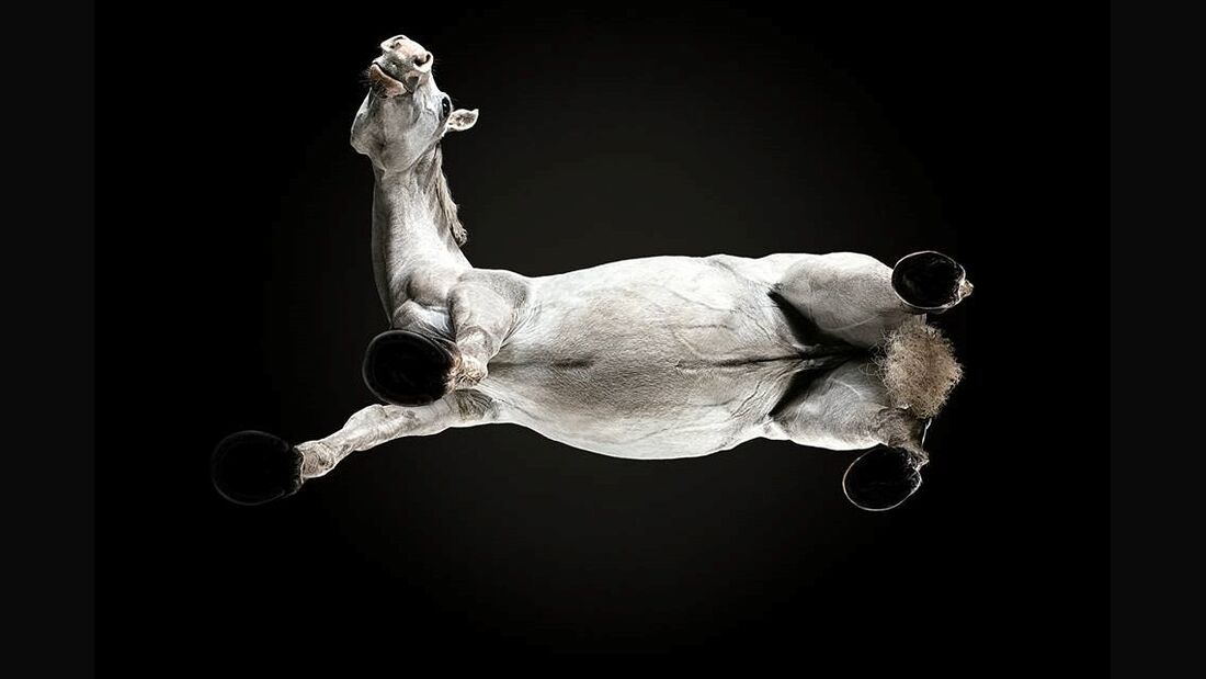 CAV Andrius Burba Under Horse Teazer