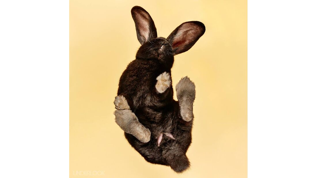 CAV Andrius Burba Under Rabbits 3