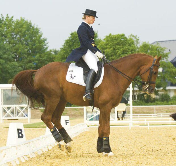 CAV Angst bei Sportpferden Bild5