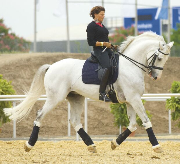 CAV Angst bei Sportpferden Bild7