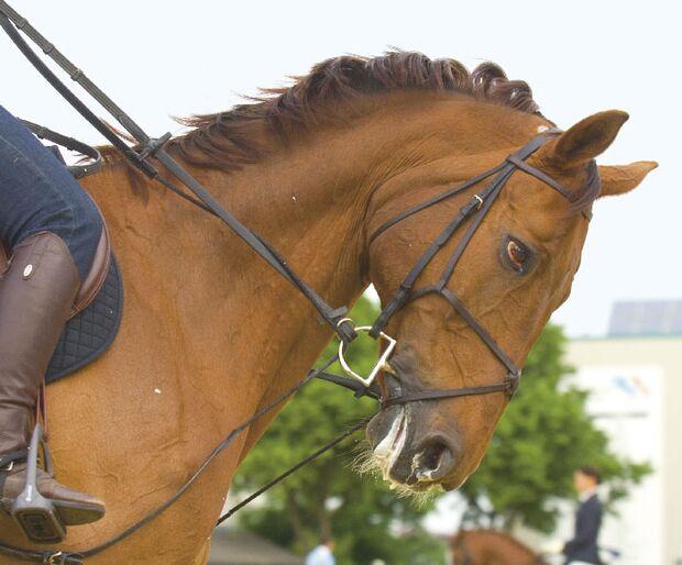CAV Angst bei Sportpferden Bild8