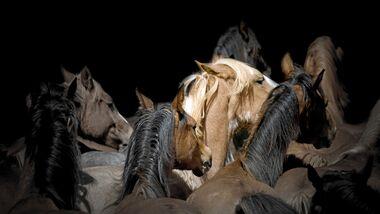 CAV Animal Hording Herde