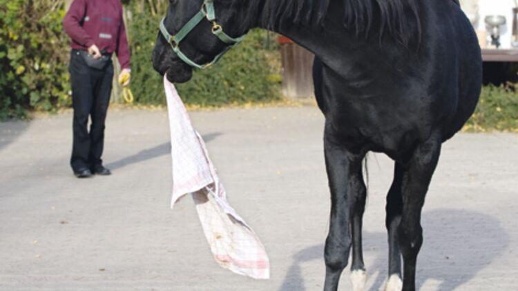 wie heißt das pferd von pippi