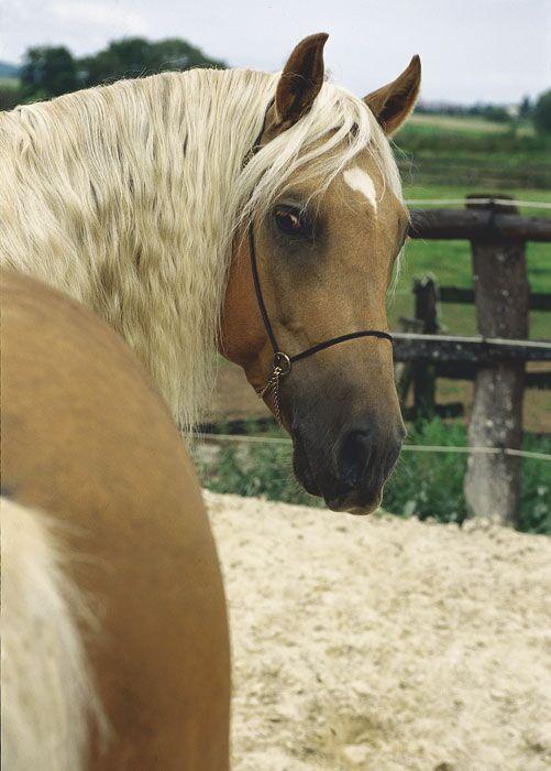 CAV Araber-Berber 11_2002 Bild 7