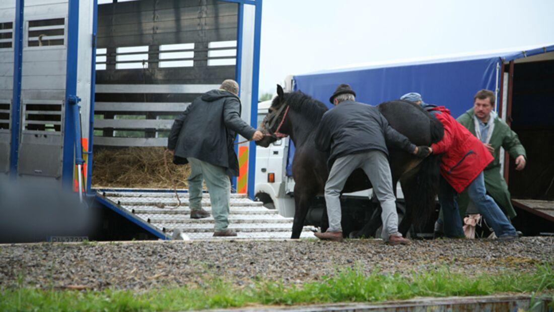 CAV Arbeitspferde Polen