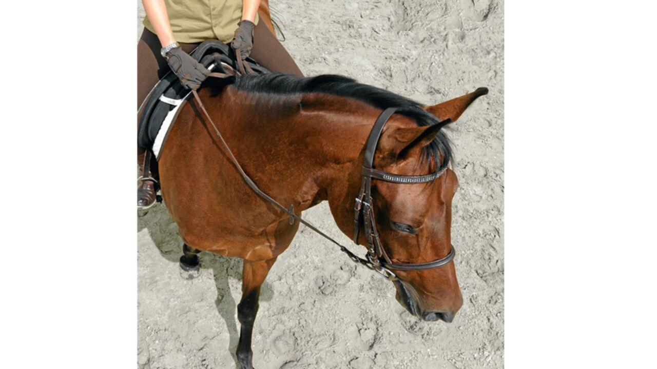Reiten pferd nackt auf Michael Zauels:
