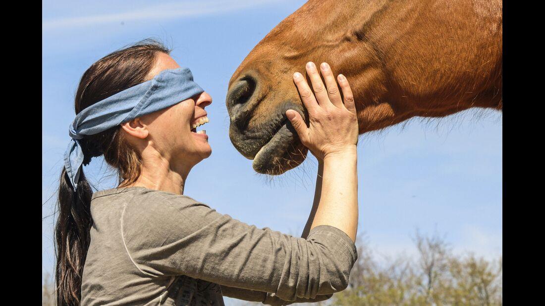 CAV Blind Date Pferd mit verbundenen Augen erkennen Teaser