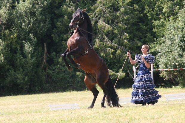 CAV Bundespferdefestival 2011 _ 04