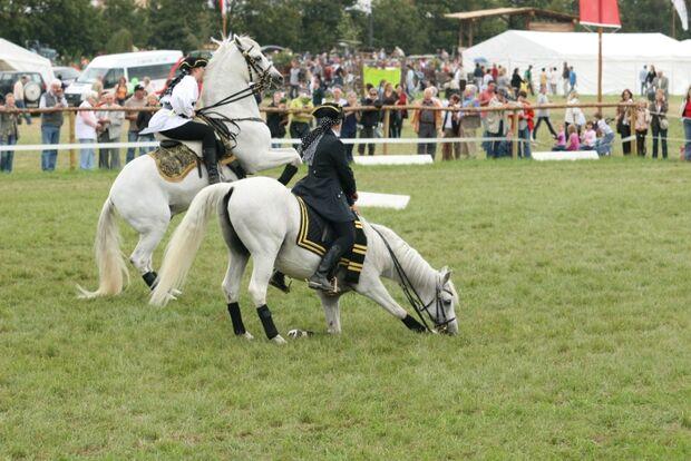 CAV Bundespferdefestival 2011 _ 10