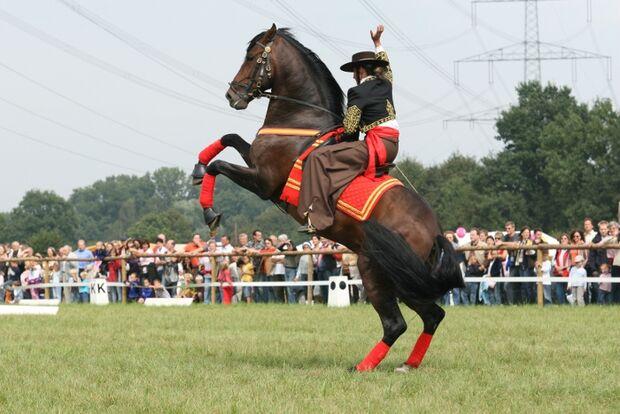 CAV Bundespferdefestival 2011 _ 11