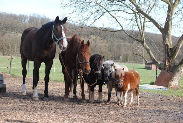 CAV CEWE Fotowettbewerb 2013 Leserfotos Chiara Wobbe - Lesertext: Auf dem Bild 1 ist der 1 jährige Mini Shetty Hengst meiner Freundin zu sehen :) er ist das beste Pony was es gibt . Für sein alter kann es schon sehr viel & hat sehr viel Vertrauen zu seine