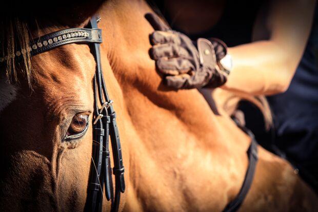 CAV CEWE Fotowettbewerb 2013 Leserfotos Christina Roling - Lesertext: Auch Nichtreitern zeigen zu können, wie stark und innig eine Bindung von Pferd und Mensch sein kann, und wieviel ein stilles Lob - eine sanfte Berührung - ausmachen kann, ist für mich d
