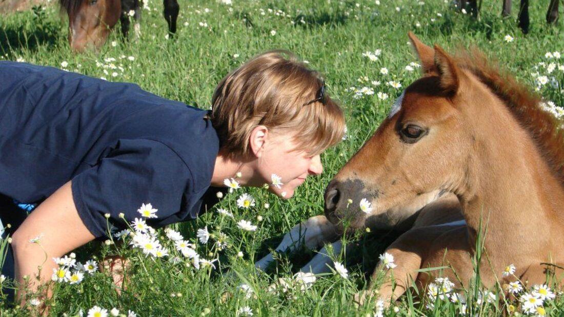 CAV CEWE Fotowettbewerb 2013 Leserfotos Christine Griebel - Lesertext: Ein Schnappschuss von Dea unserem letztjährigen Fohlen und mir beim Nickerchen auf der Koppel aufgenommen. Dea ist sehr selbstbewusst, aber auch ein sehr menschenbezogenes Paso Fino Fo