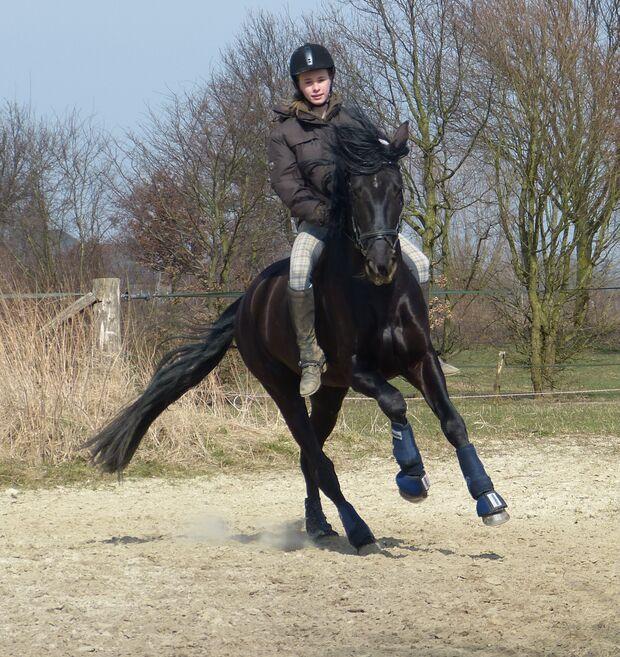 CAV CEWE Fotowettbewerb 2013 Leserfotos Doreen Winkels - Lesertext: Das ist Navegante. Er ist das beste,schönste und tollste Pferd der Welt.