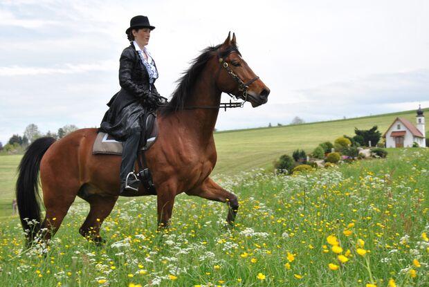 CAV CEWE Fotowettbewerb 2013 Leserfotos Doris Johann - Lesertext: Hier sehen Sie mich und meinen 6-jährigen Tennessee-Walking-Horse- Wallach. Die Arbeit mit ihm macht einfach nur Spaß! Als Kutschpferd macht er sich auch sehr gut.