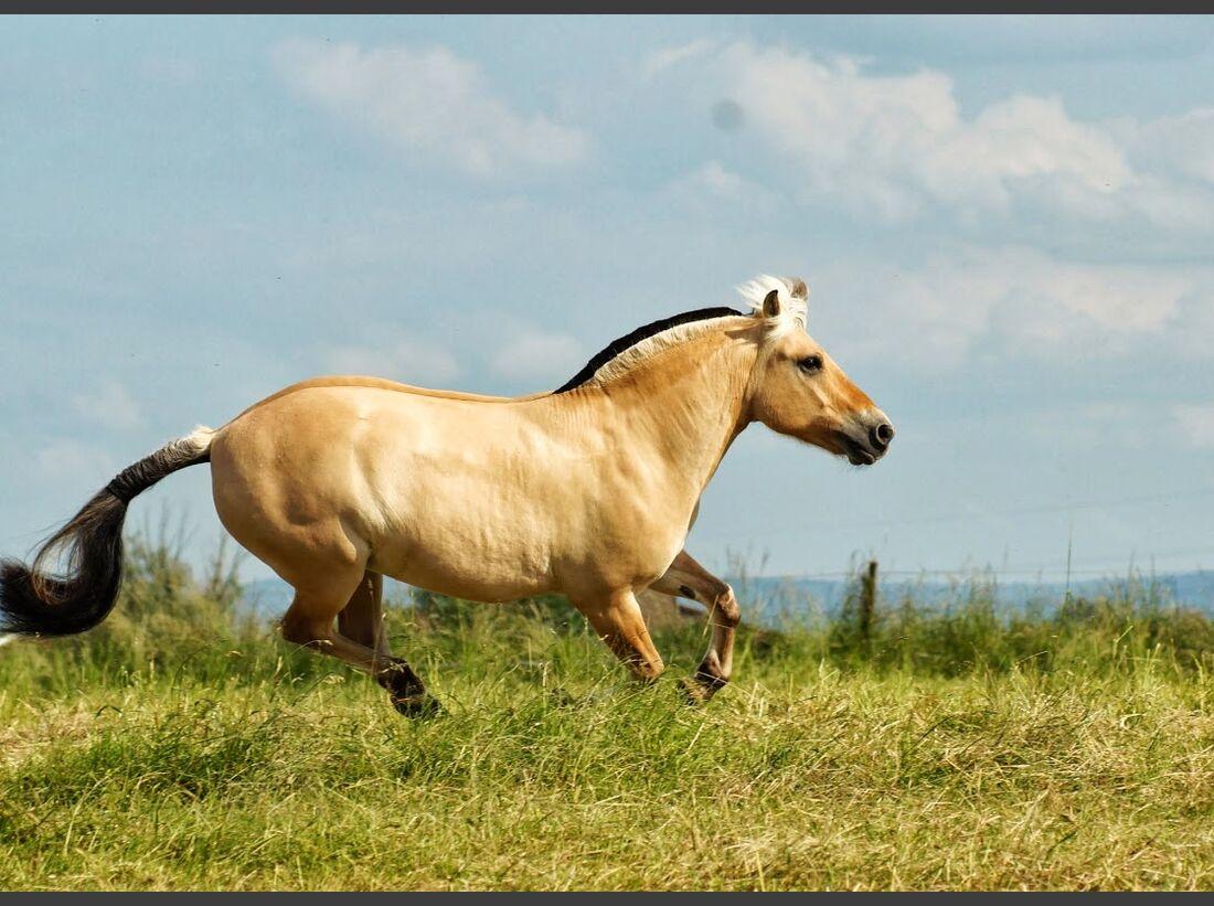 CAV CEWE Fotowettbewerb 2013 Leserfotos Joana Weber - Lesertext: Bild 1   Name des pferdes : Castella´s hope of glaise mountain´s Alter : 2 Tinkerstute   Bild 2  Name des pferdes: Samuel Alter : 7 Fjordpferd Wallach  neu