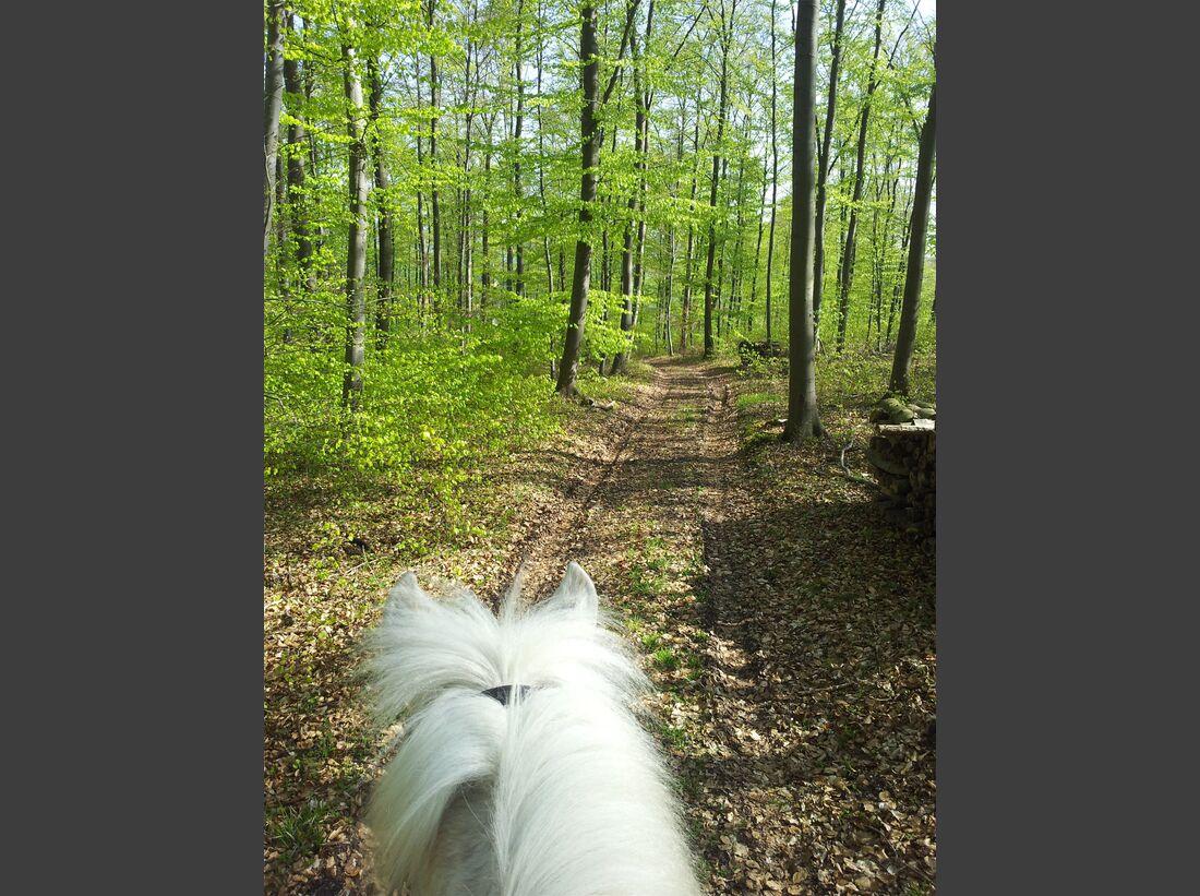 CAV CEWE Fotowettbewerb 2013 Leserfotos Katja Schlebusch - Lesertext: Dies ist mein Lieblingsbild, da es die Verbundenheit mit der Natur, Freiheit, die Zufriedenheit des Pferdes und hinter der Kamera eine glückliche Reiterin wiedergibt. Das Foto ist im Wa