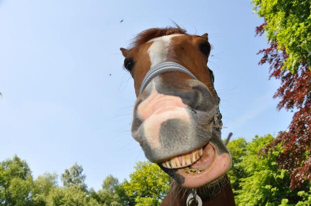 CAV CEWE Fotowettbewerb 2013 Leserfotos Katja Semrau - Lesertext: Dies sind 2 Schnappschüsse unseres neuen Familienmitglieds. Luna ist seit Mai 2013 bei mir und ist mein erstes Pferd. Sie und ich geniessen den Sommer in vollen Zügen und  wir hoffe auf vie