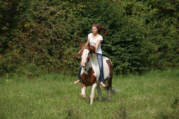 """CAV CEWE Fotowettbewerb 2013 Leserfotos Lena Lautenschlager - Lesertext: \""""Wenn der Mensch je eine große Eroberung gemacht hat, so ist es die, dass er sich das Pferd zum Freund gewonnen hat. \"""" (Unbekannt)   Das ist mein Pferd Jabonero, einmal mit seiner"""