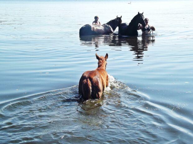 CAV CEWE Fotowettbewerb 2013 Leserfotos Luise Richter - Lesertext: Beide Bilder zeigen uns mit unseren Pferden und vor allem mit unserem kleinen Stutfohlen Amber beim Training auf der Wiese und Spaß beim Planschen im See.