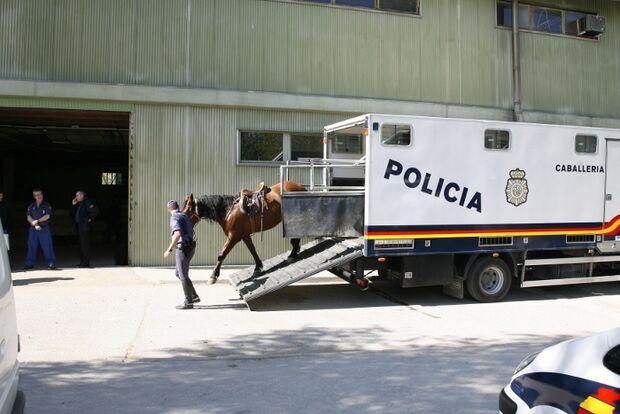 CAV Caballeria Madrid Polizei-Reiter 05