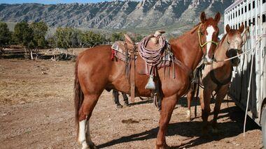 CAV Cattle Drive Western Horsemanship Montana Rinder MS_03