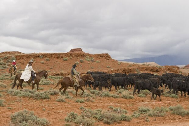 CAV Cattle Drive Western Horsemanship Montana Rinder MS_07