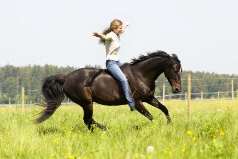CAV Cavallo Cup Pferd ohne Sattel