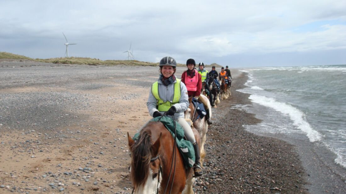 CAV Clydesdale_01 Cumbrian Heavy Horses
