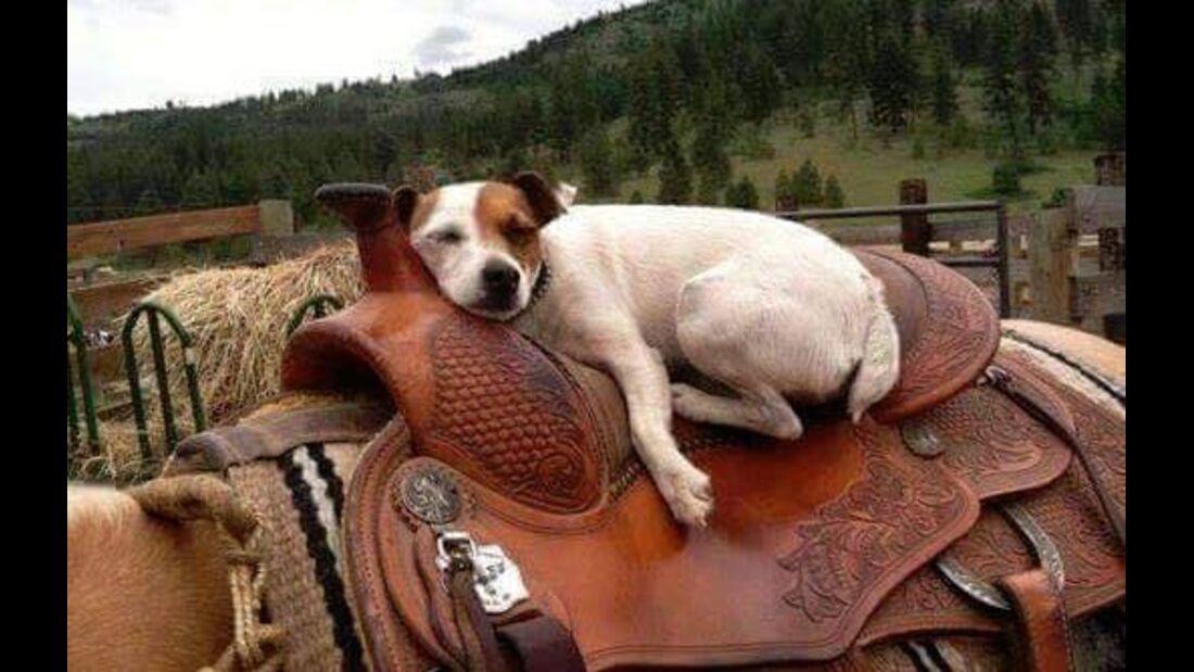 CAV Dally Spanky Hund Schlafen