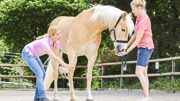 CAV Dehnen Pferd 1