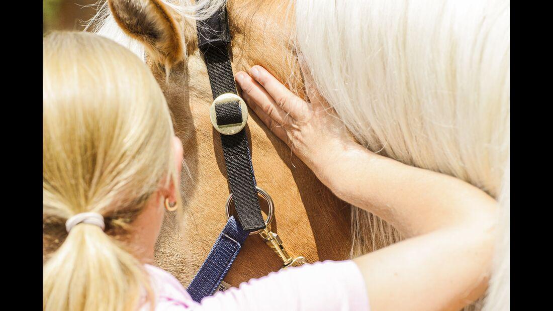 CAV Dehnen Pferd 10