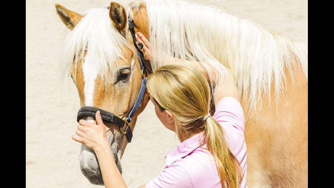 CAV Dehnen Pferd 11
