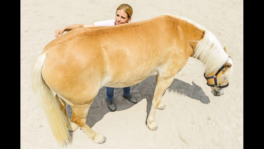 CAV Dehnen Pferd 12