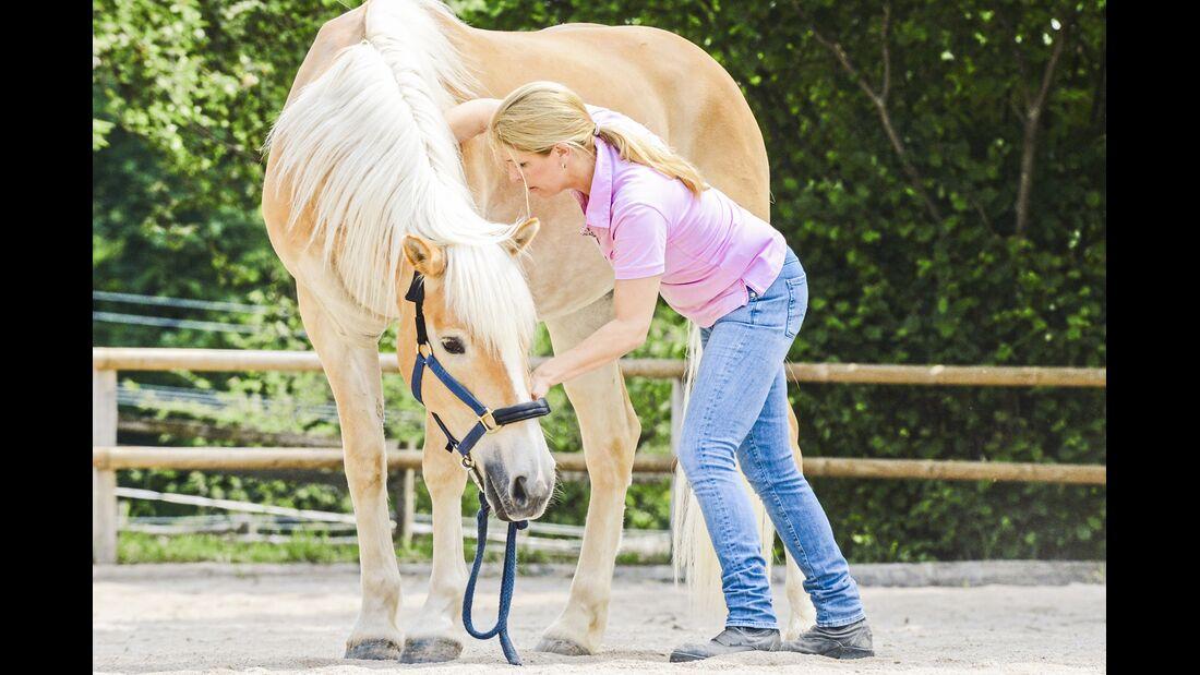 CAV Dehnen Pferd 2