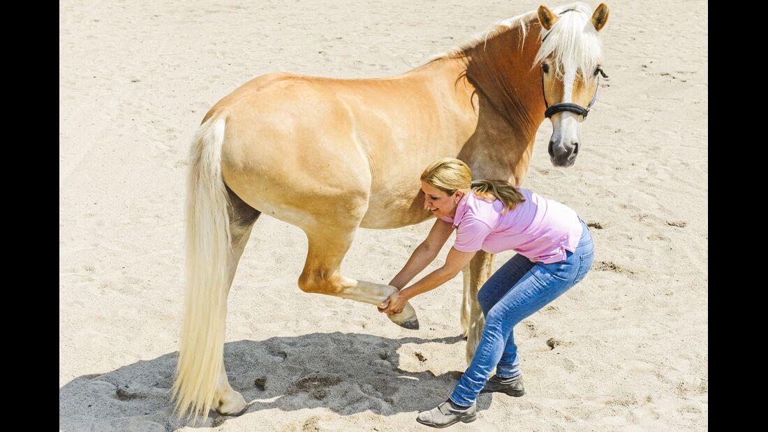CAV Dehnen Pferd 6