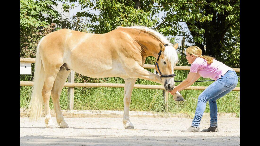 CAV Dehnen Pferd 7