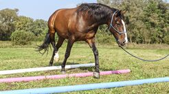 CAV Denksport fürs Pferd