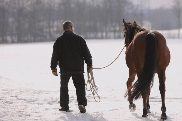 CAV Dicke Stute Pferd