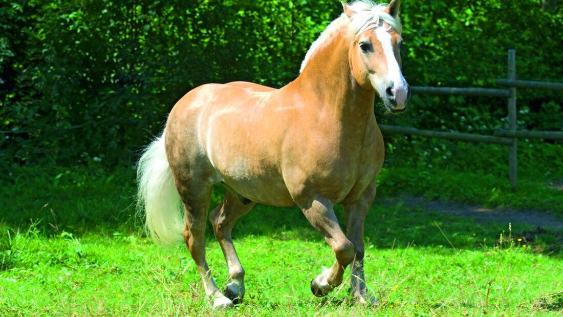 CAV Dickes Pferd EMS