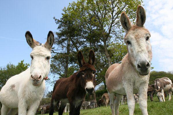 CAV Donkey Sanctuary 10