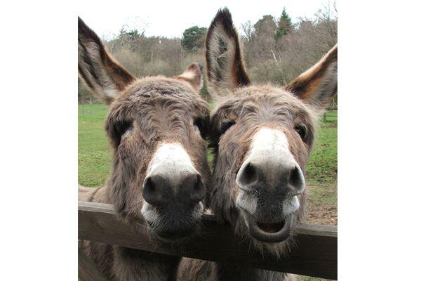 CAV Donkey Sanctuary 11
