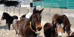 CAV Donkey Sanctuary 16