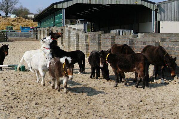 CAV Donkey Sanctuary 17