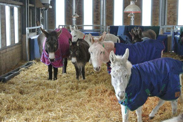 CAV Donkey Sanctuary 19