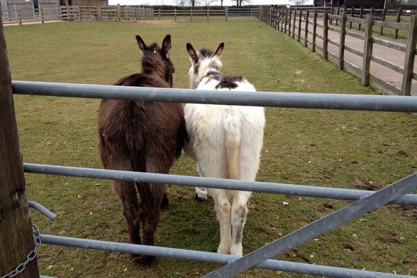 CAV Donkey Sanctuary 2